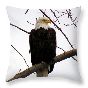 Cape Eagle Throw Pillow