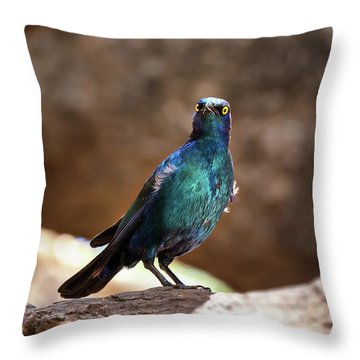 Cape Glossy Starling Throw Pillow