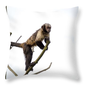 Throw Pillow featuring the photograph Capuchin Monkey by Scott Lyons