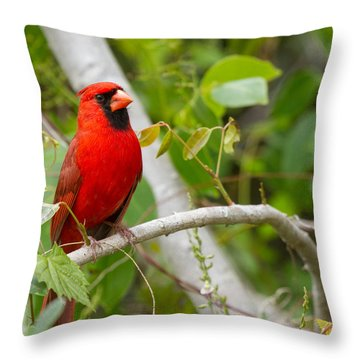 Cardinal 147 Throw Pillow