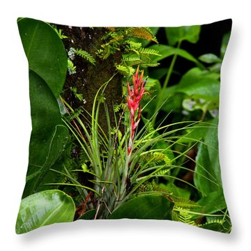 Throw Pillow featuring the photograph Cardinal Airplant by Barbara Bowen