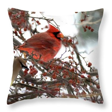 Throw Pillow featuring the photograph Cardinal And Cedar Wax Wing Feeding On Crab Apples by Betty Pauwels