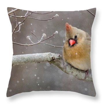 Cardinal And Falling Snow Throw Pillow