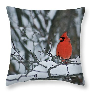 Cardinal And Snow Throw Pillow