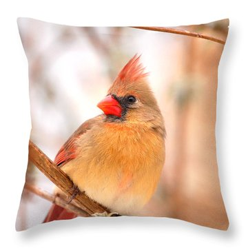 Cardinal Bird Female Throw Pillow by Peggy Franz