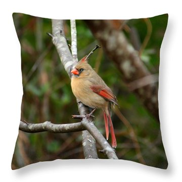 Throw Pillow featuring the photograph Cardinal by Cathy Harper