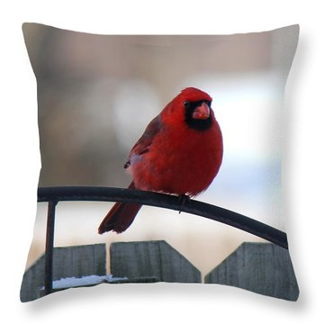 Cardinal Closeup Throw Pillow