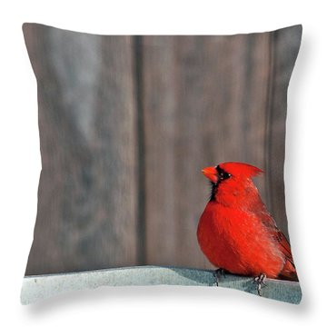 Cardinal Drinking Throw Pillow