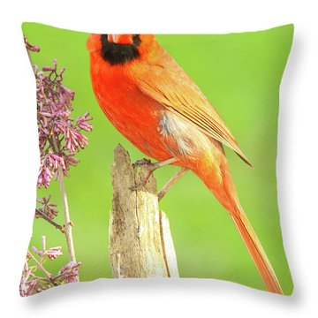Cardinal Flowery Perch Throw Pillow