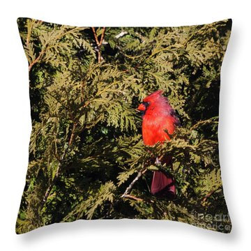 Throw Pillow featuring the photograph Cardinal I by Michelle Wiarda