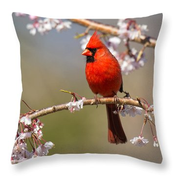 Throw Pillow featuring the photograph Cardinal In Cherry by Angel Cher