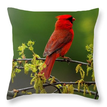 Cardinal In Early Spring Throw Pillow