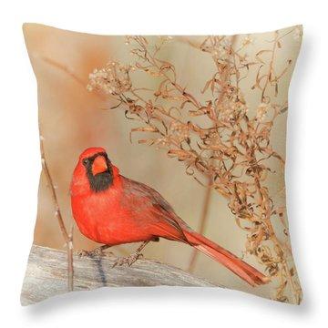 Cardinal In Fall  Throw Pillow