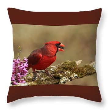 Cardinal In Spring Throw Pillow by Sheila Brown