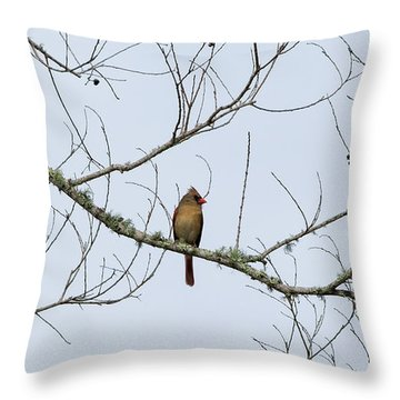 Cardinal In Tree Throw Pillow by Richard Rizzo