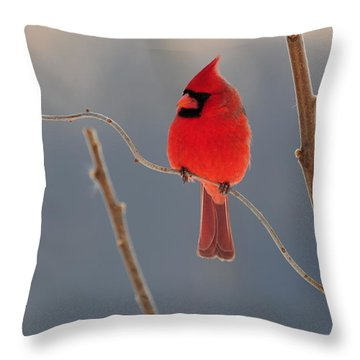 Throw Pillow featuring the photograph Cardinal by Mike Martin