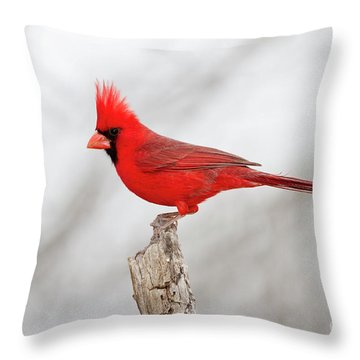 Cardinal On Branch Throw Pillow