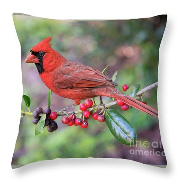 Cardinal On Holly Branch Throw Pillow by Bonnie Barry