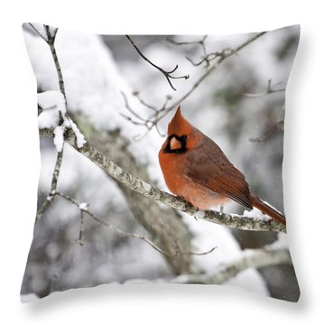 Cardinal On Snowy Branch Throw Pillow by Rob Travis