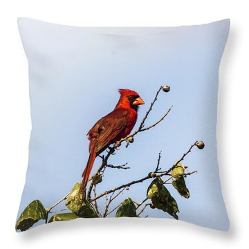 Cardinal On Treetop Throw Pillow by Robert Frederick