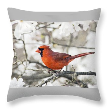 Throw Pillow featuring the photograph Cardinal Spring - D009909-a by Daniel Dempster