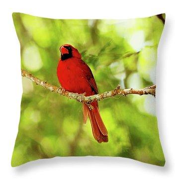 Cardinal Stare Throw Pillow