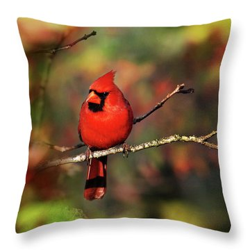 Cardinal Territory Throw Pillow by Christina Rollo