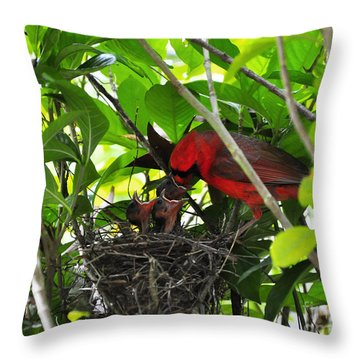 Cardinals Chowtime Throw Pillow by Al Powell Photography USA