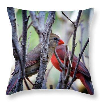 Cardinals Pair Throw Pillow