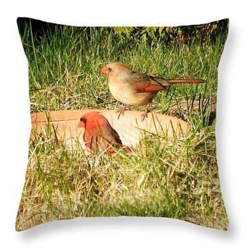 Cardinals Throw Pillow by Vicky Tarcau