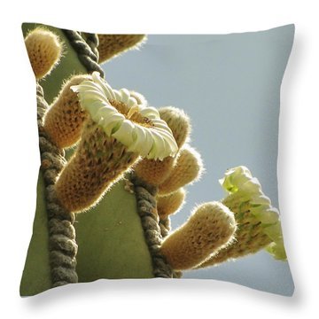 Throw Pillow featuring the photograph Cardon Cactus Flowers by Marilyn Smith