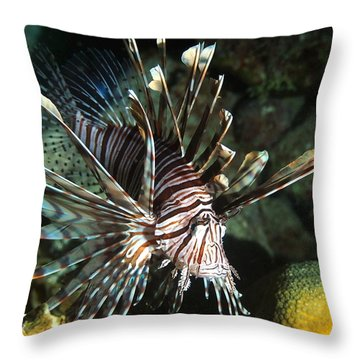 Caribbean Lion Fish Throw Pillow by Amy McDaniel