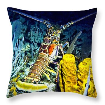 Caribbean Reef Lobster Throw Pillow by Amy McDaniel