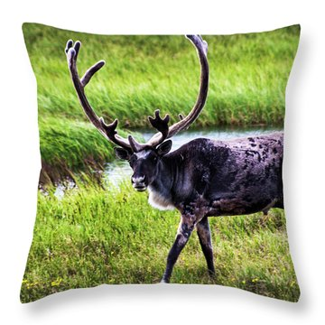 Throw Pillow featuring the photograph Caribou by Anthony Jones