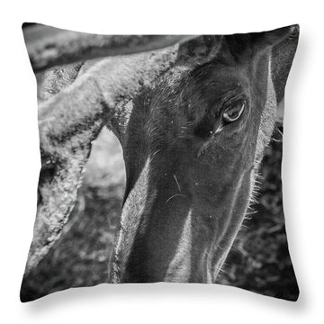 Caribou Black And White Throw Pillow