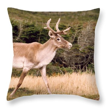 Caribou Throw Pillow by Mary Mikawoz