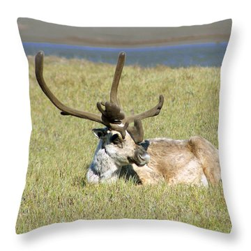 Caribou Rest Throw Pillow by Anthony Jones