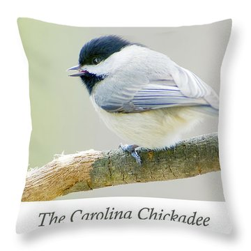 Carolina Chickadee, Animal Portrait Throw Pillow