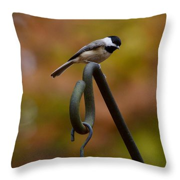 Throw Pillow featuring the photograph Carolina Chickadee by Robert L Jackson