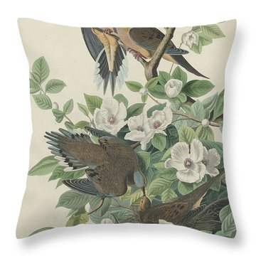 Carolina Pigeon Or Turtle Dove Throw Pillow by Anton Oreshkin