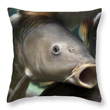 Carp Throw Pillow by Jane Rix