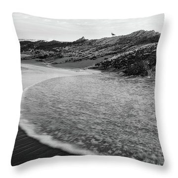 Throw Pillow featuring the photograph Carpinteria Seagull by Tim Newton