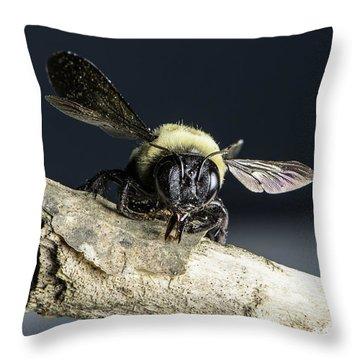 Carpenter Bee Throw Pillow
