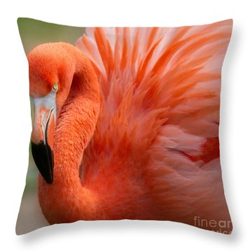 Caribbean Flamingo Throw Pillow