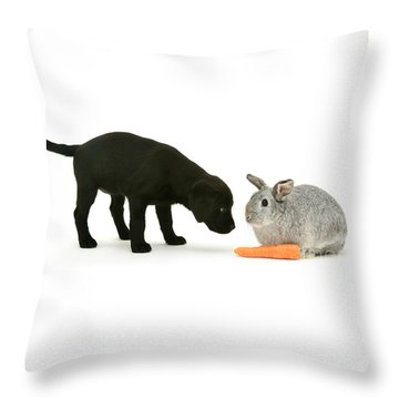 Throw Pillow featuring the photograph Carrots Are For Pups, Too by Warren Photographic