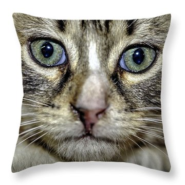 Cat 1 Throw Pillow by Isam Awad