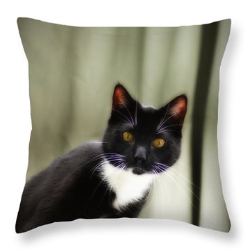 Cat Cat Throw Pillow by Bill Cannon
