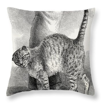 Cat In An Affectionate Frame Of Mind Throw Pillow