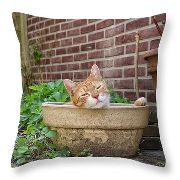 Throw Pillow featuring the photograph Cat In Empty Pot by Patricia Hofmeester