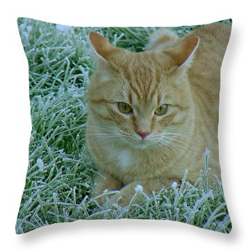 Cat In Frosty Grass Throw Pillow by Shirley Heyn